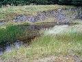 Forest Pond, Glenshimmeroch. - geograph.org.uk - 528304.jpg