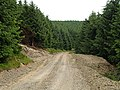 Forest Track, Pike Hill - geograph.org.uk - 467195.jpg