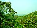 Forest at Chintoor in Khammam district, Andhra Pradesh.JPG