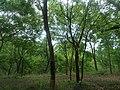 Forest at Kambalakonda in Visakhapatnam 04.JPG