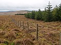 Forest edge and fence, Falla Moss - geograph.org.uk - 663715.jpg