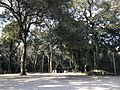 Forest in Chiriku Hachiman Shrine.jpg