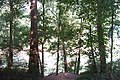Forest in Mammoth Cave National Park - Flickr - mamamusings.jpg
