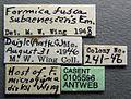 Formica dirksi casent0105596 label 1.jpg