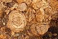 Fossil Cliff UAE -Paolo Rossetti Weekenduae.com 2012-03-23-.jpg