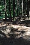 Foxholes - Bois Jacques - Bastogne - 12.jpg