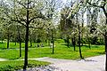 Frühling im Bad Mergentheimer Kurpark. 11.jpg