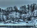 Frosted Trees (16444462021).jpg