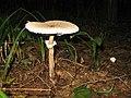 Fungi 017.jpg