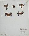 Fungi agaricus seriesI 053.jpg
