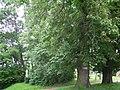 Głuchów (10.VI.2007).JPG
