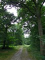 GOC Hoddesdon 042 Hertford Heath Nature Reserve (28777635624).jpg
