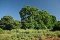 Gallecs - panoramio (2).jpg