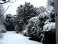 Garden in snow at Rotterdamseweg Delft, winter 2006.JPG