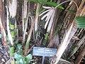 Gardenology.org-IMG 1970 hunt0903.jpg