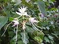Gardenology.org-IMG 2326 ucla09.jpg