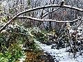 Georgia snow IMG 2741 (27170163669).jpg