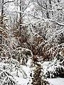 Georgia snow IMG 4476 (38230811794).jpg