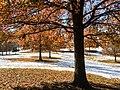 Georgia snow IMG 5744 (38932568182).jpg