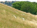 Giant feet on Giant Hill, Cerne Abbas - geograph.org.uk - 211935.jpg