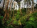 Glen Maye - geograph.org.uk - 773797.jpg