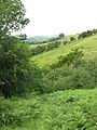 Glyndwr's Way footpath above Llangunllo - geograph.org.uk - 876056.jpg