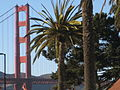 Golden Gate from Palms.JPG