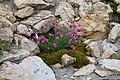 "Gradina Botanica ""Vasile Fati"" (4660530789).jpg"