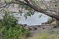 Grant County, WA, USA - panoramio (2).jpg