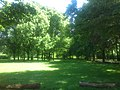Green park near Burgholzstraße - Naturkundemuseum - panoramio.jpg