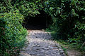 Green tunnel 00.jpg