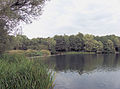 Grote Veenderplas, noordzijde stort, Ede (2).jpg