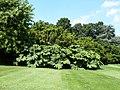 Gunnère en bordure du parc (château de Montmarin).jpg