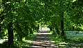 H.13.317 - Brylewo Park.JPG