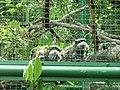 HK Zoo NB Gdns Emperor Tamarin 1.jpg