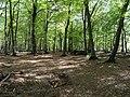 Hambach forest 43.jpg