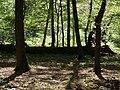 Hambach forest 50.jpg