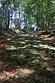 Harz Wanderung Stecklenberg - Hexentanzplatz - Thale - Alter Fuhrweg(Bergmannstieg) auf die Harzhochfläche - panoramio.jpg