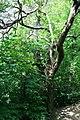 Hawthorn in Firth Park - geograph.org.uk - 938202.jpg