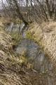 Herbstein Herbstein Schalksbach Tributary Frog Spawn SCI 555520799 N.png