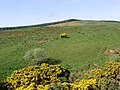 Hill farmland - geograph.org.uk - 438468.jpg