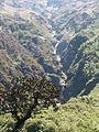 Himalyan beauty.jpg