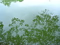 Hoan Kiem Lake reflection 2.jpg