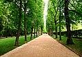 Hofgarten Allee - Flickr - Stiller Beobachter.jpg