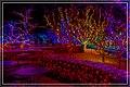 Holiday Lights (38437804914).jpg