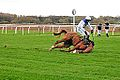 Horse Racing (8137819284).jpg