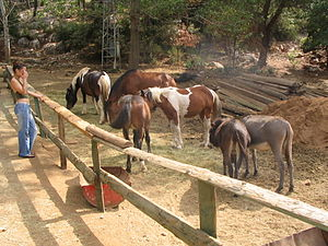 Horse farm in Lovrečina bay, island of Brač, C...