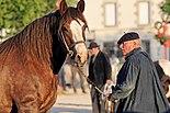 Horse trait breton 5622.jpg
