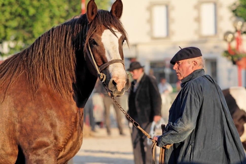 Horse trait breton 5622