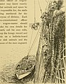 Horses, saddles and bridles (1906) (14784859283).jpg